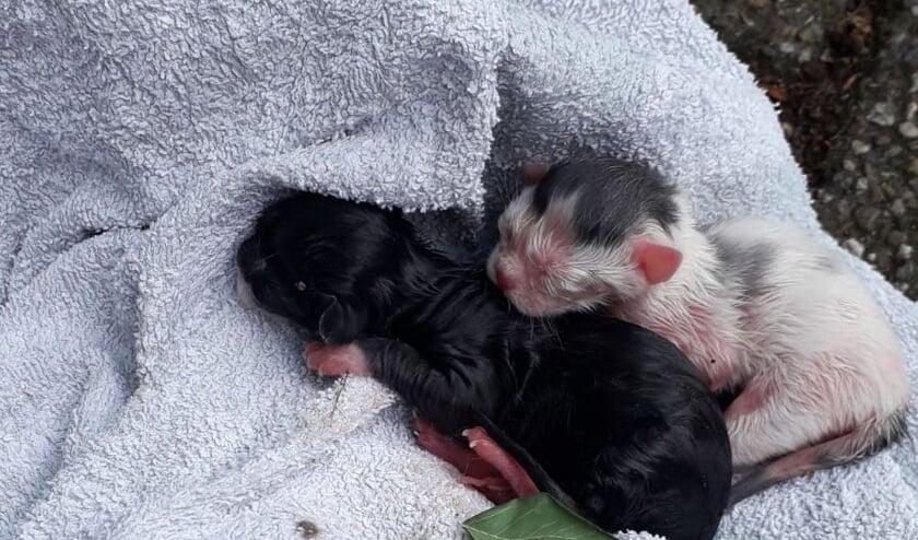 <p>Bewoners ontfermen zich regelmatig over pasgeboren katjes uit nestjes in de struiken naast de weg, en verwaarloosd door de eigenaren.</p>