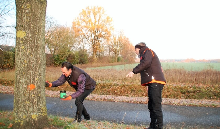 Donderdag waren Arie Koolen en Peter Claassen van Zeg Ut Mar nog druk in de weer om de bomen aan de Hertog Janstraat te 'ont-stippen', als protest tegen de kap.