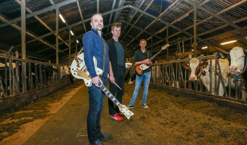 <p>Tussen de koeien op de boerderij in Duiven waar ze repeteren (vlnr); Thijs Holten, Alwin de Graaf, Remco Goorhuis. (Foto: René Nijhuis Fotografie)</p>
