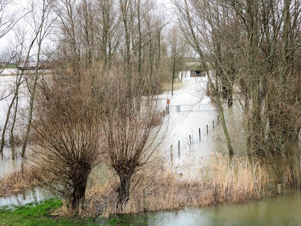 Rika Hooijkaas maakte zondag deze foto van het hoge water in Zuilichem.  © DPG Media