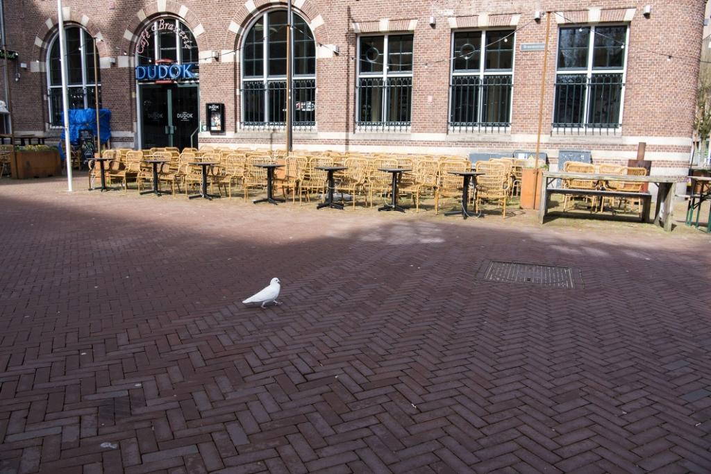 Alleen een witte duif lijkt nog onbezorgd over straat te lopen. Foto: Ellen Koelewijn © DPG Media