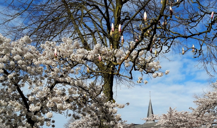 Het corona-virus kan de lente niet tegenhouden. De Oude Kerk, van ver zichtbaar: een eeuwenoud monument van hoop en troost.