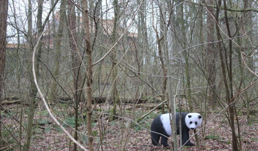 Wu Wen  is gespot in de bossen achter 'Pandasia' buiten het dierenpark. (Creatie: Henk Coppes).