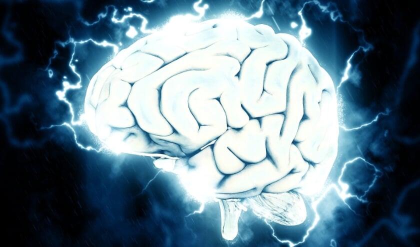 <p>quiz hersenen</p>