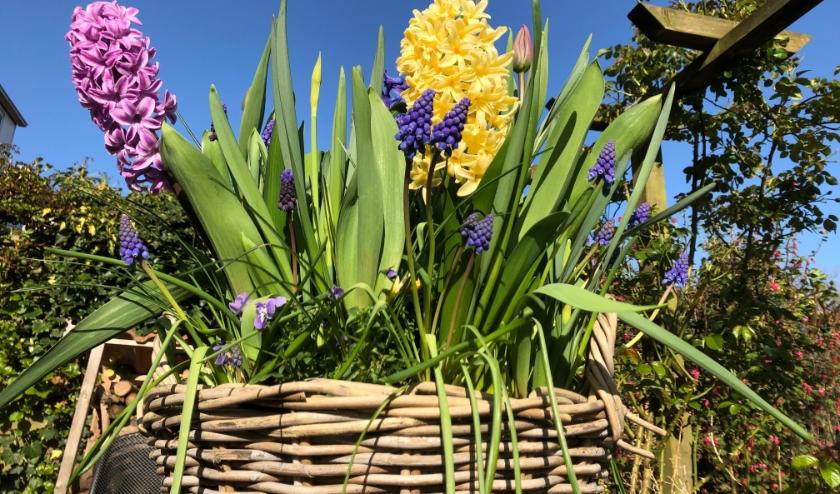 Het is lente! Alles bloeit opeens tegelijk en veel insecten zijn weer actief! Van hommel tot lieveheersbeestje. De bloemengroet vanuit Zoete Aarde hoort hierbij. Foto: Simone Langeveld