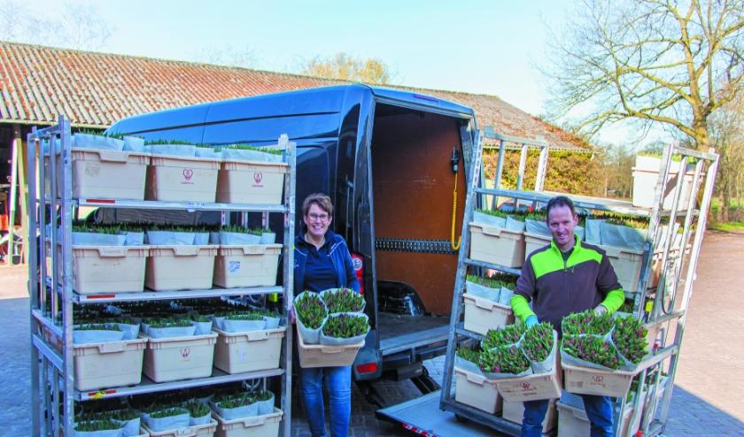 Voetencentrum Wender en Kwekerij Visschedijk verrassen 980 zorgmedewerkers met een fraai bos tulpen. (Foto: PR)