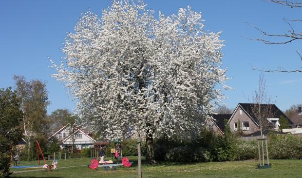 Hans Mullink maakte op 15 april deze foto: lente in de Aa.   © DPG Media