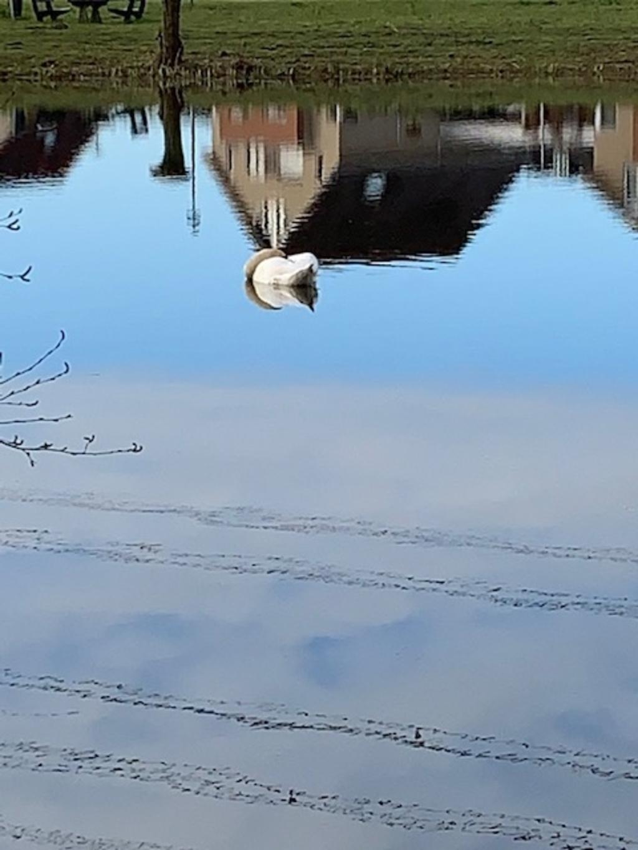 Coby ten Harkel maakte deze mooie reflectie-foto bij de Weustevijvers.  © DPG Media