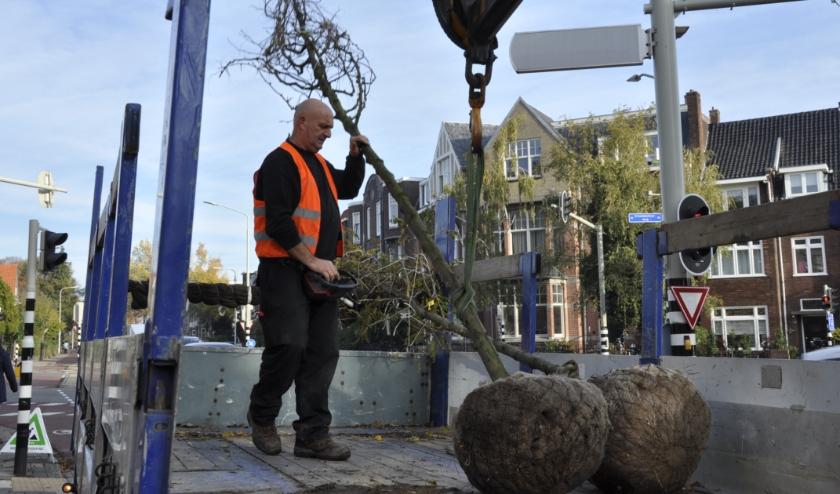 Laat weten waar u bomen wilt laten planten in Hatert en Lindenholt.