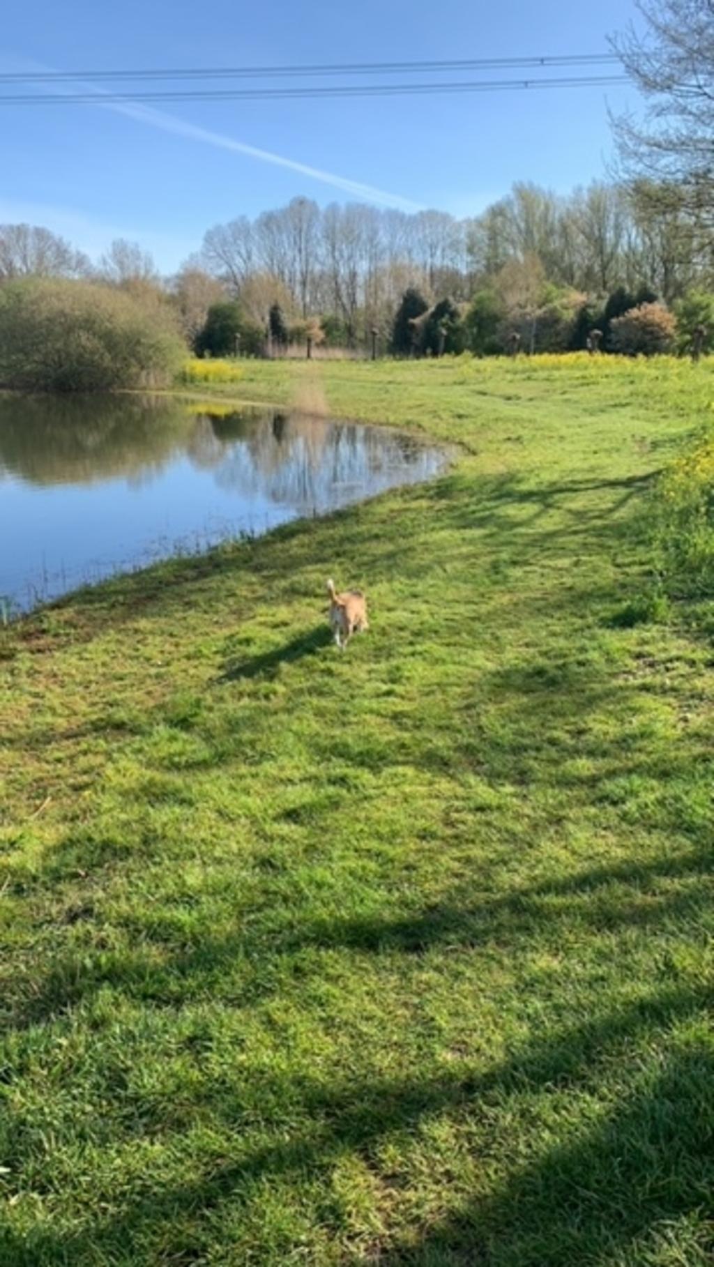 Heerlijk wandelen met beagle Do bij de vijvers van de Weuste. Foto: Coby ten Harkel.  © DPG Media