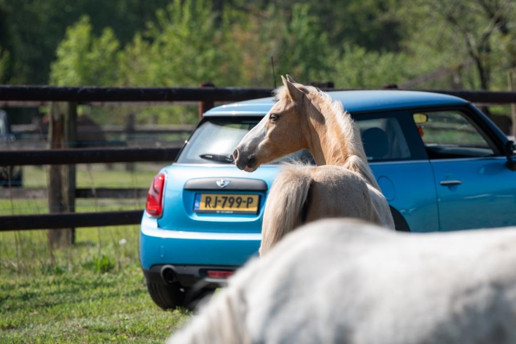 PCK Eersel tijdens corona pck safari Foto: Liefs sam fotografie © DPG Media
