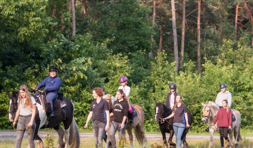 Een gezellig groepsuitje door de bossen.