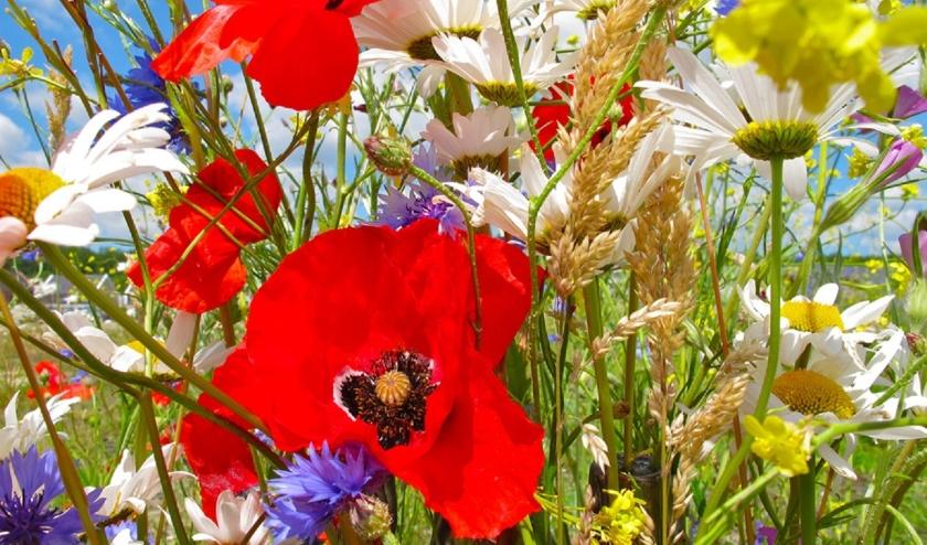 Door de bloemenlinten worden er meer insecten getrokken en het ziet er een stuk fleuriger uit dan een gemaaide grasberm!