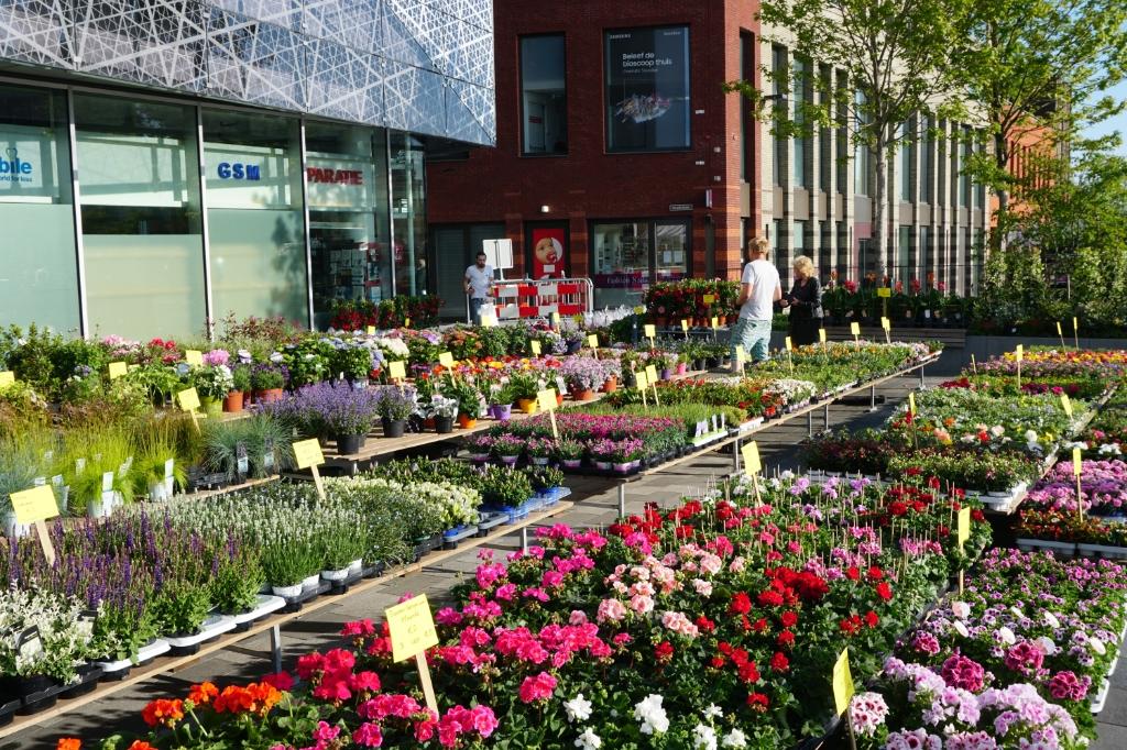 Dát is nog eens wat je noemt 'de bloemetjes buiten zetten'. Foto: Louise Mastenbroek  © DPG Media