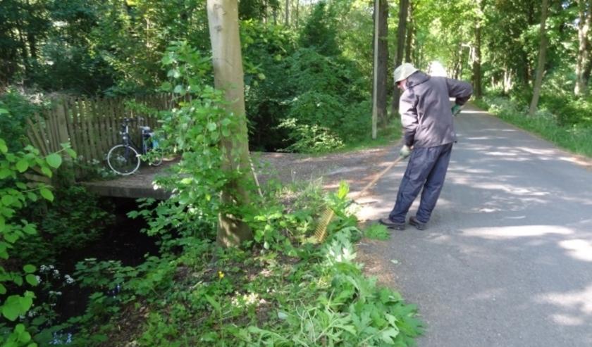 Vrijwilligers van de Zeister Exotenbrigade houden de natuur vrij van 'indringers'.