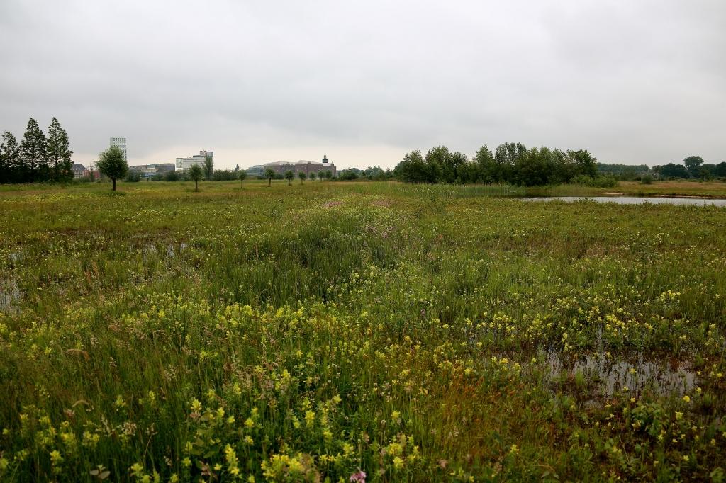 Er werden afgelopen jaar 125 belangrijke plantensoorten gevonden. Foto: Fons Mandigers © bosscheomroep.nl