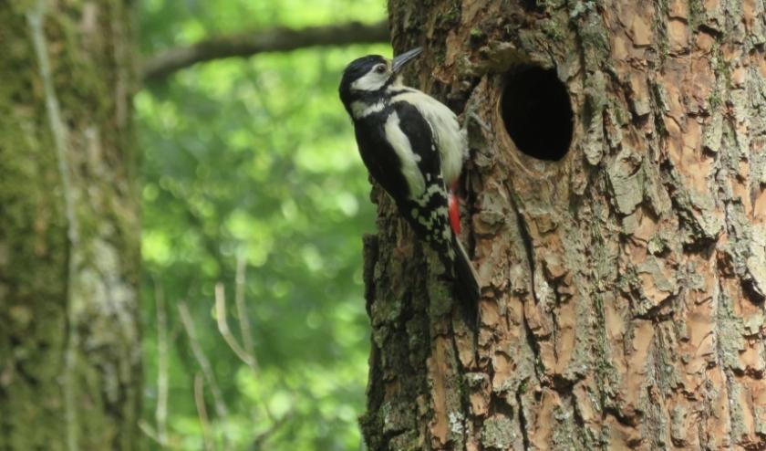 'Kleine spechtjes zaten in de boom te piepen om eten.' Foto: Mary van der Heiden.