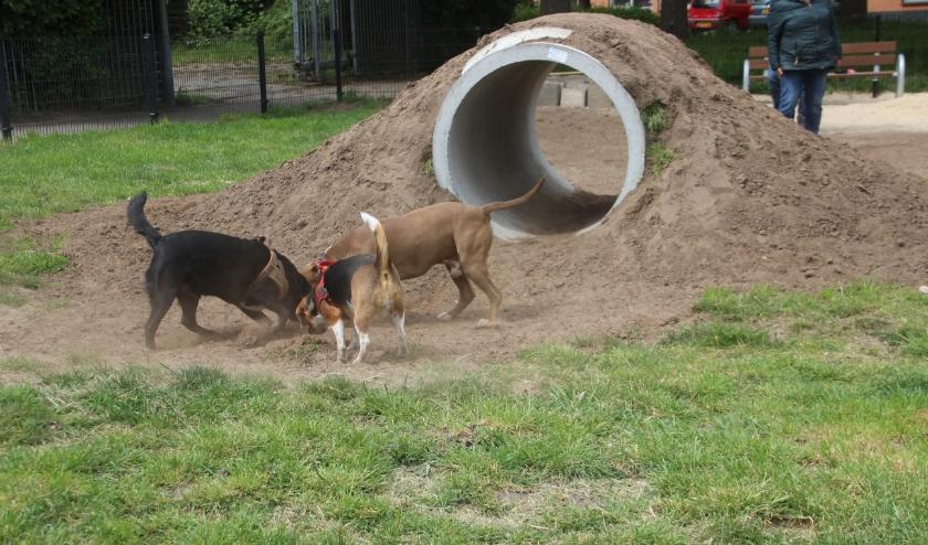 Honden zijn maar wat blij met de grote duiker die onlangs werd geplaatst