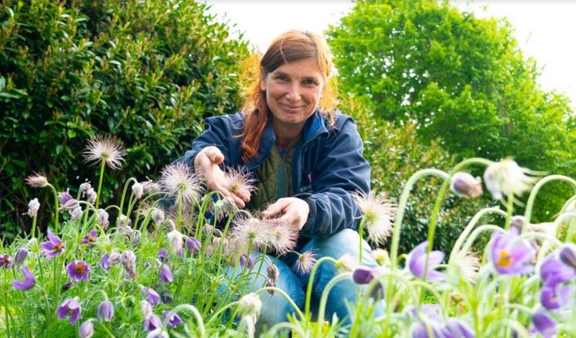 Jeanette van de Tuinen van Appeltern laat zien dat Wildemanskruid een goed voorbeeld is van een mooie plant die weinig water nodig heeft.