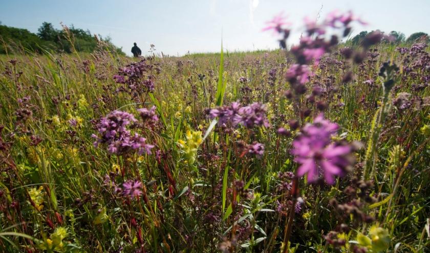 Kleurig bloemenspektakel op de Vlietlanden