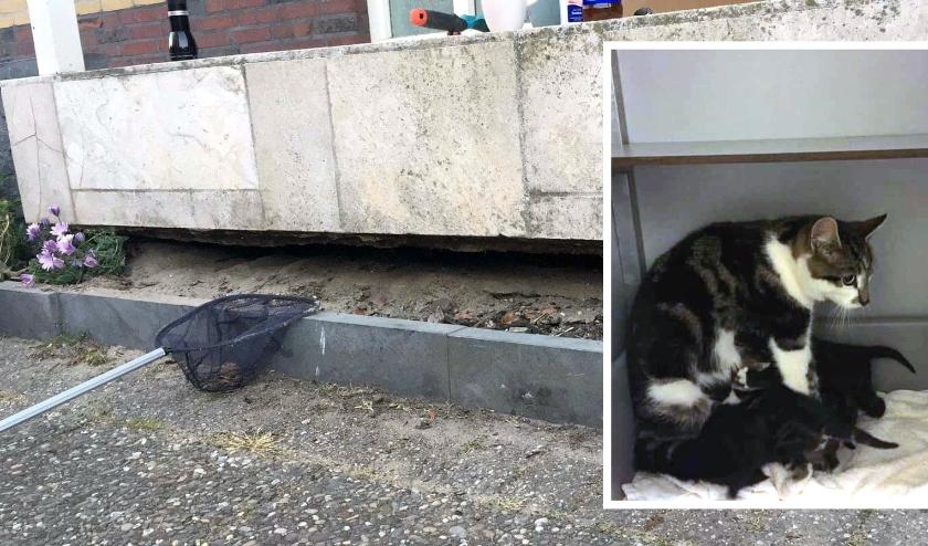 De nauwe ruimte onder het huis waar het nestje kittens zat. Inzet: het volledige kattengezinnetje in de opvang.