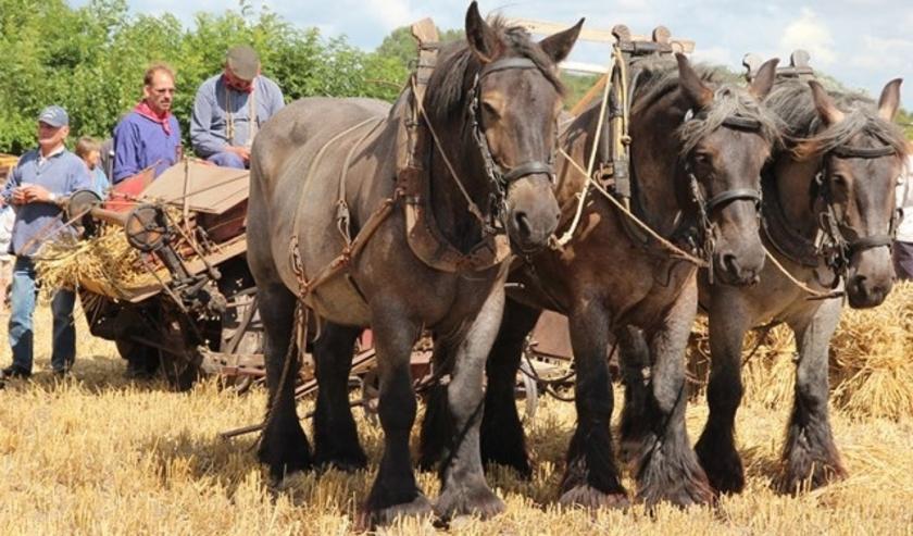 Eerdere editie historische landbouwdag Rhoon.