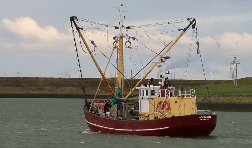 De garnalenkotter KG-8 van schipper Gerard Verburg op weg naar zee. (foto W.M. den Heijer)
