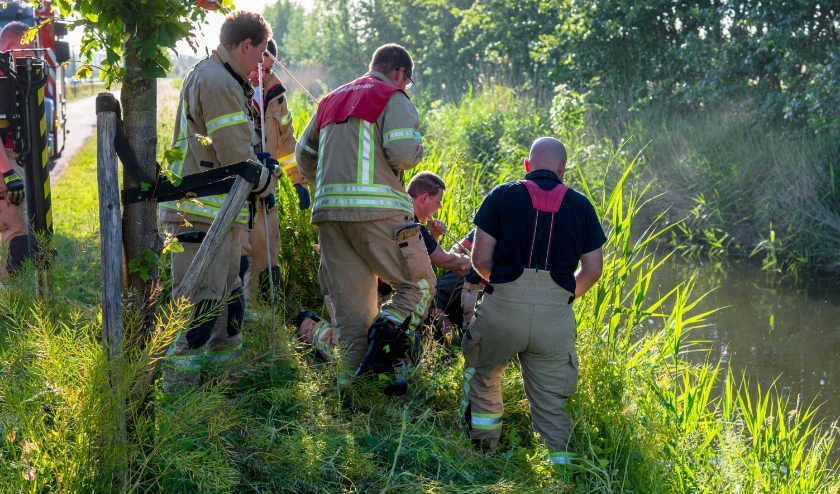Brandweermannen proberen paard te redden, helaas tevergeefs. Foto: AS Media
