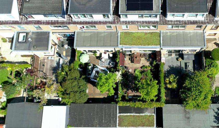 Een al aangelegd groen dak in Nieuwegein. (Foto: Privé)