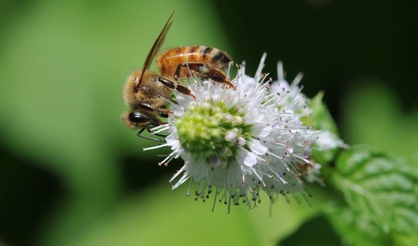 Biodiversiteit is de sleutel tot een gezonde toekomst voor iedereen.