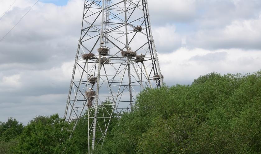In de mast bevinden zich geen 31 ooievaarsnesten, zoals online werd beweerd, maar negen! En ook dat is heel bijzonder.