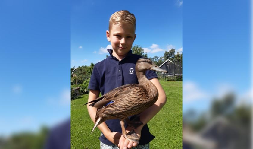 Dankzij de goede zorg van Thijmen en zijn broer en zusjes groeide Kwebbel uit tot een flinke eend!
