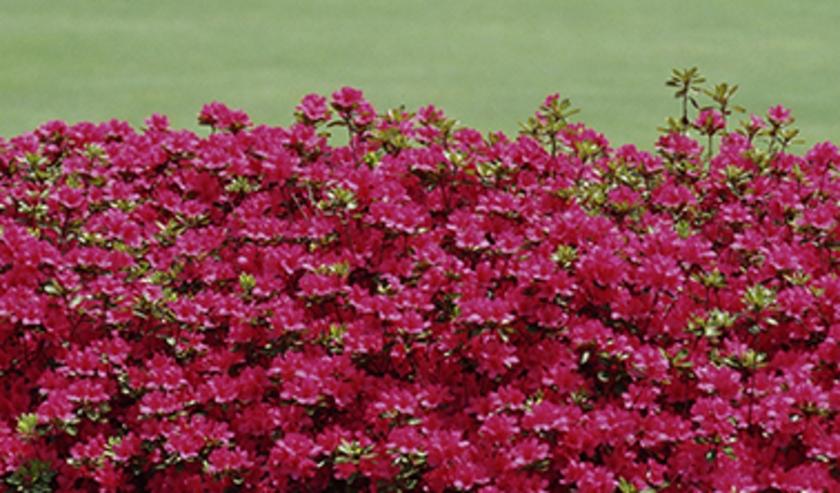 Het webinar over gezond tuinieren is online te volgen na aanmelding.