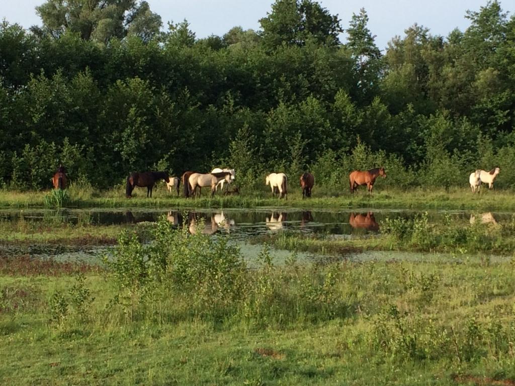 Paarden in de ochtend bij de Doorbraak. Foto: Karin Veneklaas.  Foto: Karin Veneklaas © DPG Media