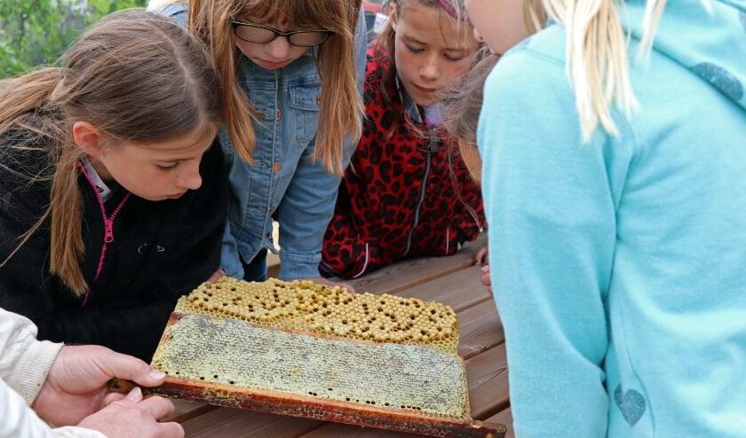 Een imker liet het bijenvolk zien. (Foto: Marsja Haanstra)