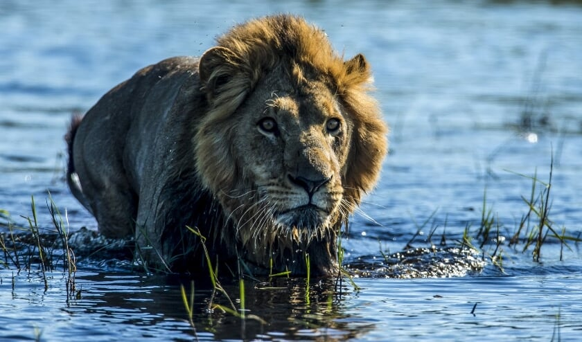 Still uit de film Okavango River of Dreams - Paradise'