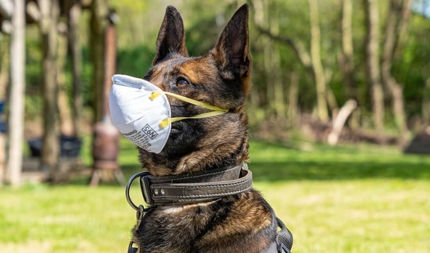 'De beroemdste hond van Nederland maakt zich zorgen.'