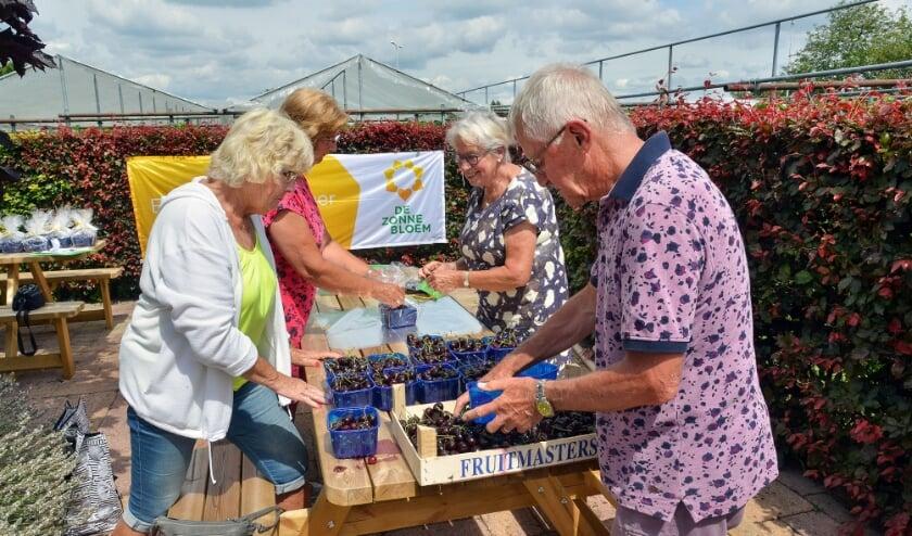 Vrijwilligers van De Zonnebloem afdeling Montfoort/Linschoten pakken de bakjes met kersen in, bestemd voor de gasten van De Zonnebloem. (Foto: Paul van den Dungen)