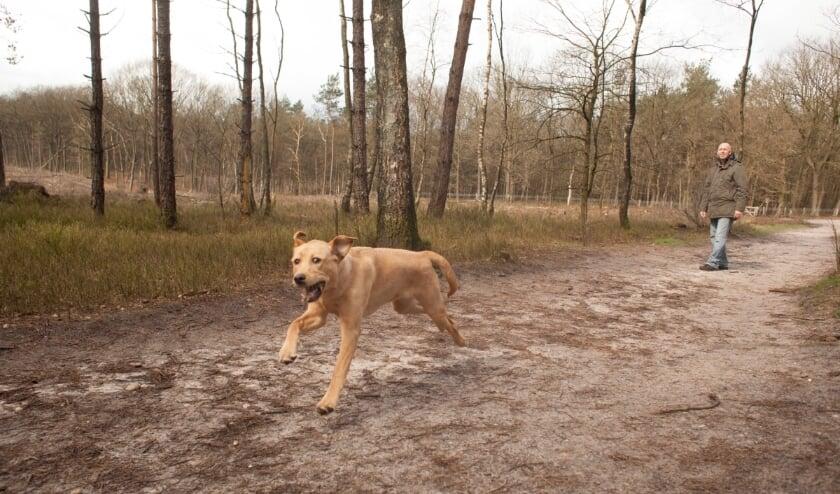 Honden in hondenlosloopgebied 't Leesten