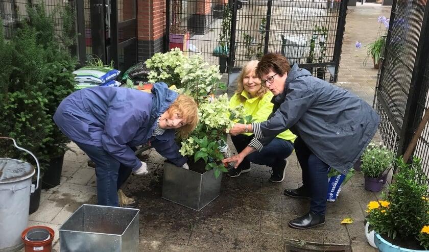v.l.n.r. Ada van Gorcom, Anet de Haan en Marja Stuijts voorzien het kleine tuintje van planten en bloemen. De ouderen genieten er enorm van.
