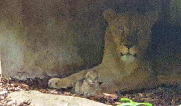 Foto: Koninklijke Burgers' Zoo © DPG Media