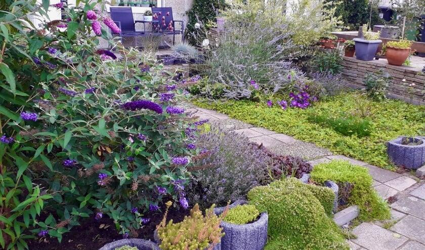 Een perkje met vlinderstruiken brengt veel leven in de tuin; de overgebleven tegels vormen een mooi muurtje. FOTO: Jannie Landa.