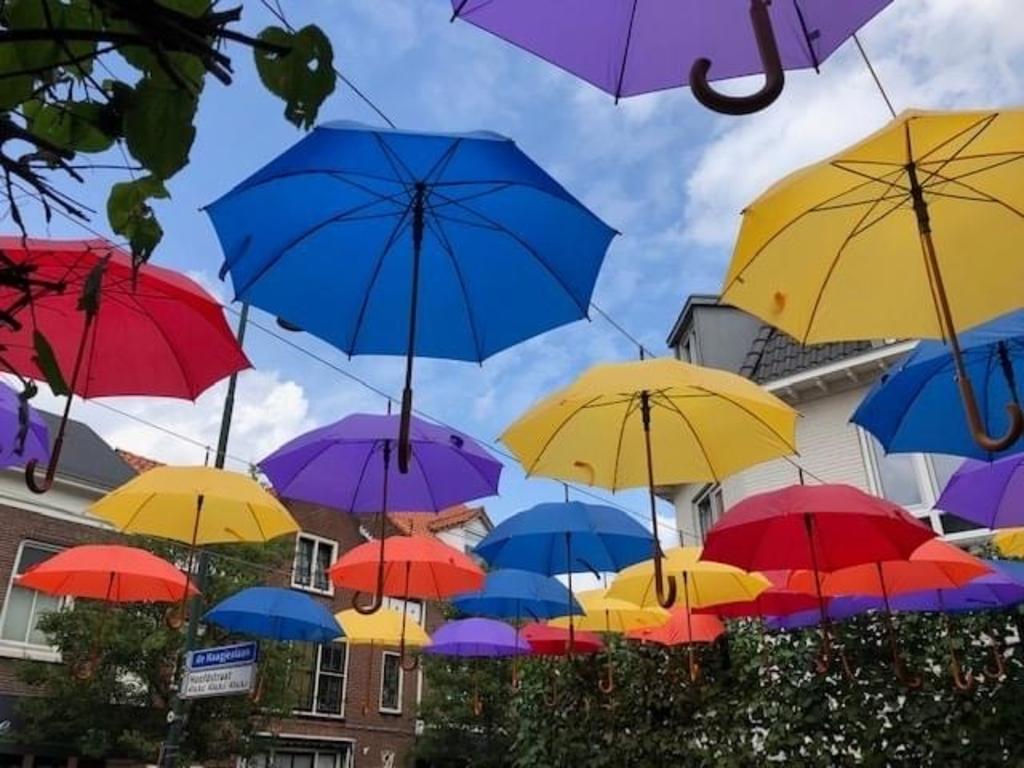 Paraplu's in de Terbporgse Hoofdstraat. Foto:  © DPG Media