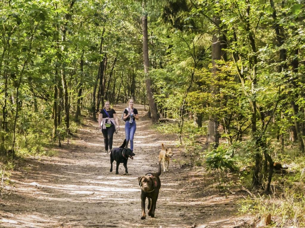 Honden in hondenlosloopgebied 't Leesten Foto:  © DPG Media