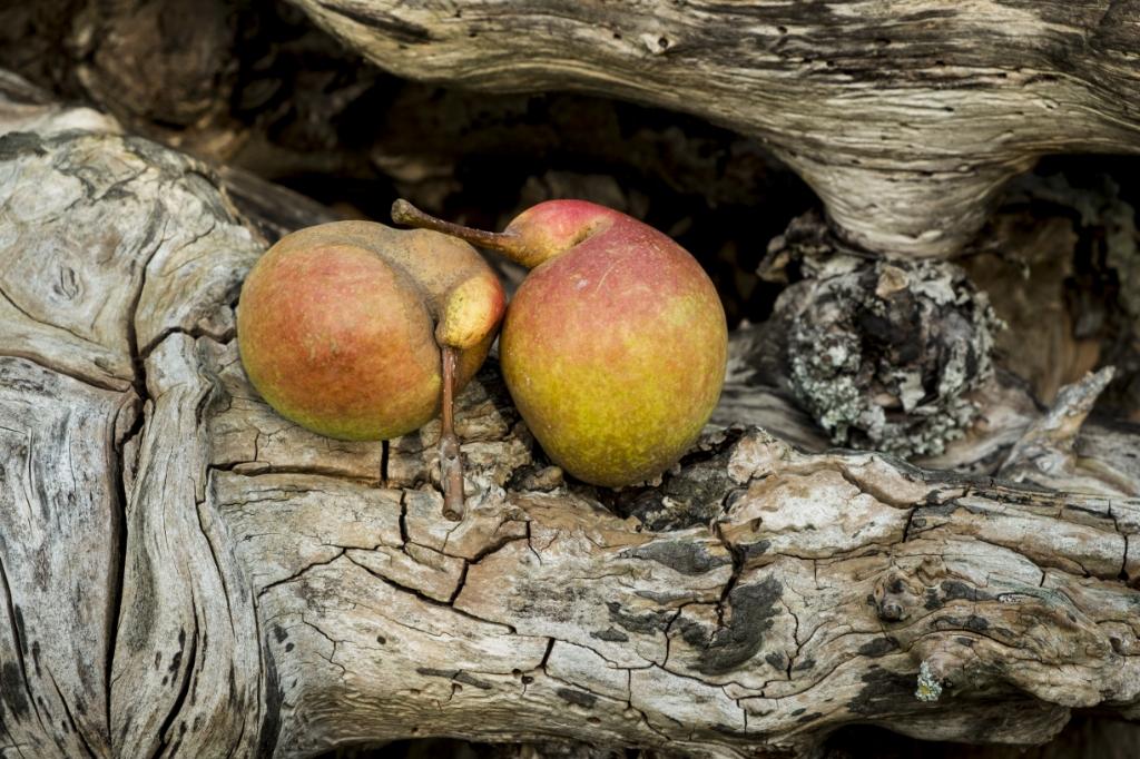 Krenkelaar in combinatie met een oud stuk hout een prachtig beeld. Zo wordt een natuurfoto een kunstwerk.  (eigen foto) Foto:  © DPG Media
