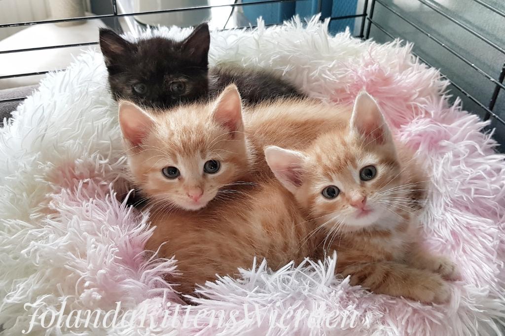 <p>Gucci,Boss en Dior: een vrolijke drieling.</p> <p>Foto:Kittens Wierden</p> © DPG Media