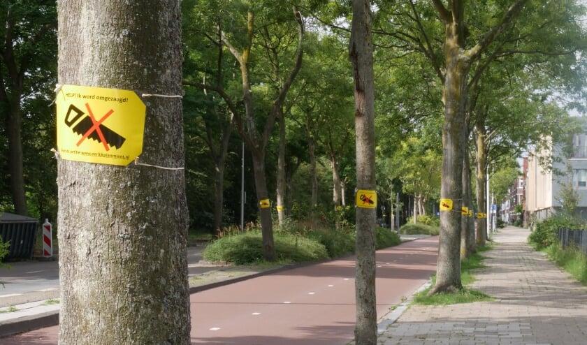 Op de Mient moeten veel bomen wijken voor extra parkeerplaatsen.