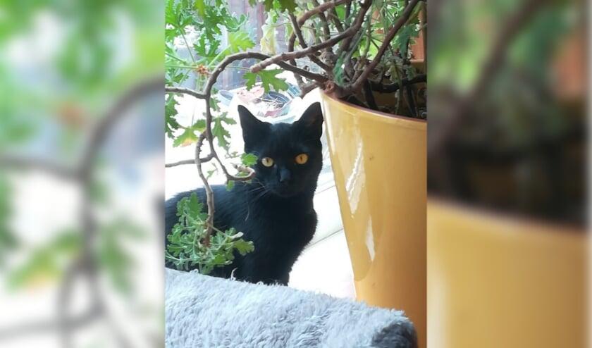 <p>Katertje Pumba houdt van spelen, lekkere hapjes, rustige honden en andere katten.&nbsp;</p>