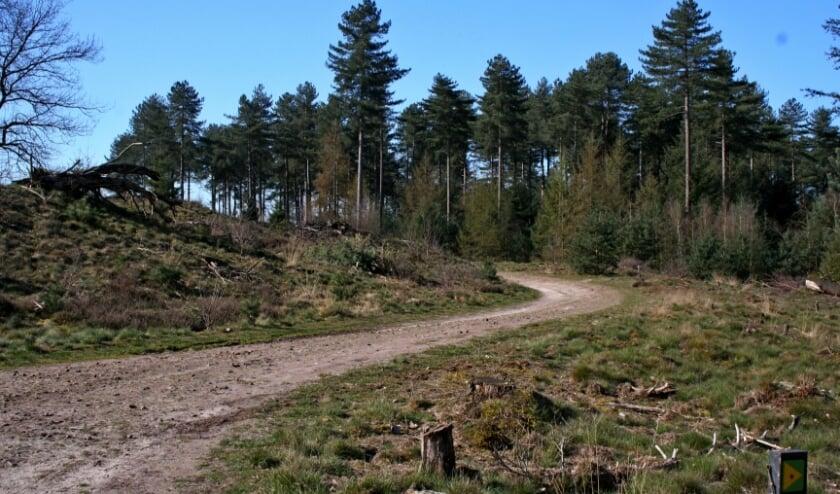 Het Brabants Vennenpad loopt door onder andere de Strabrechtse Heide, het Leenderbos en de Groote Heide.