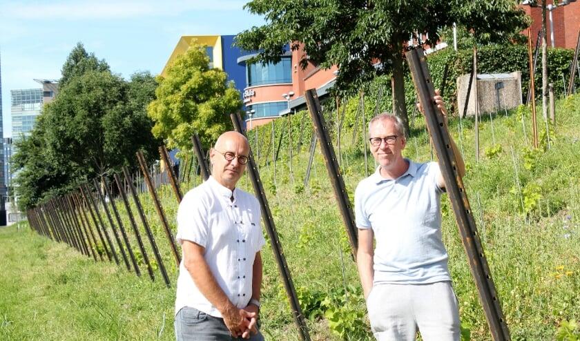 Hans Tobé en Rob Verduin bij de stadswijngaard aan de Abram van Rijckevorselweg. Foto: Annemarie van der Ploeg
